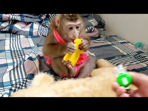 Monkey Baby Nui | Nui went to the room to discover toys in the cabinet