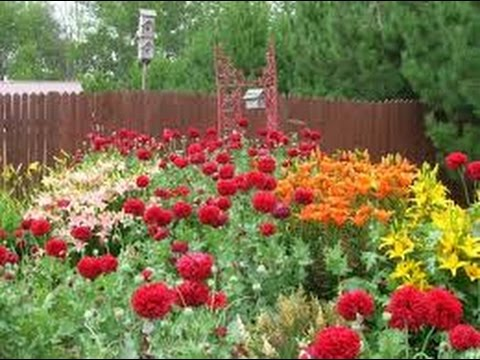 173 how to grow garden poppy candytuft from seed hindi urdu 17 173 how to grow garden poppy candytuft from seed hindi urdu 1710 16 mightylinksfo