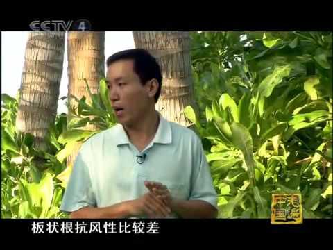 走遍中国 《揭开西沙群岛的神秘面纱》 1
