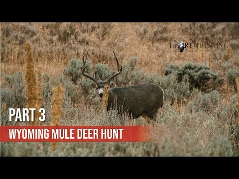 LOTS OF PUBLIC LAND DEER - Wyoming DIY Mule Deer Hunt (Part 3 Of 10)