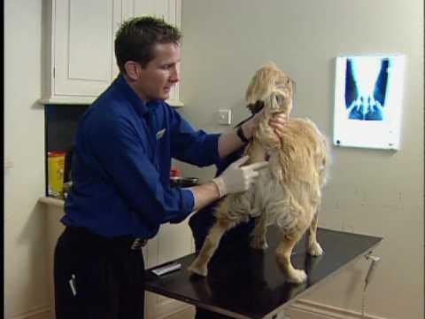 Werk mannen Cleansing anal glands by veterinarian the best