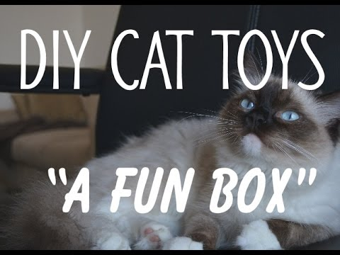 DIY Cat Toys. 'A Fun Box'. Make your cat happy,