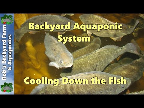 Backyard Aquaponic IBC system update, Cooling down the fish.. 11th January 2013..