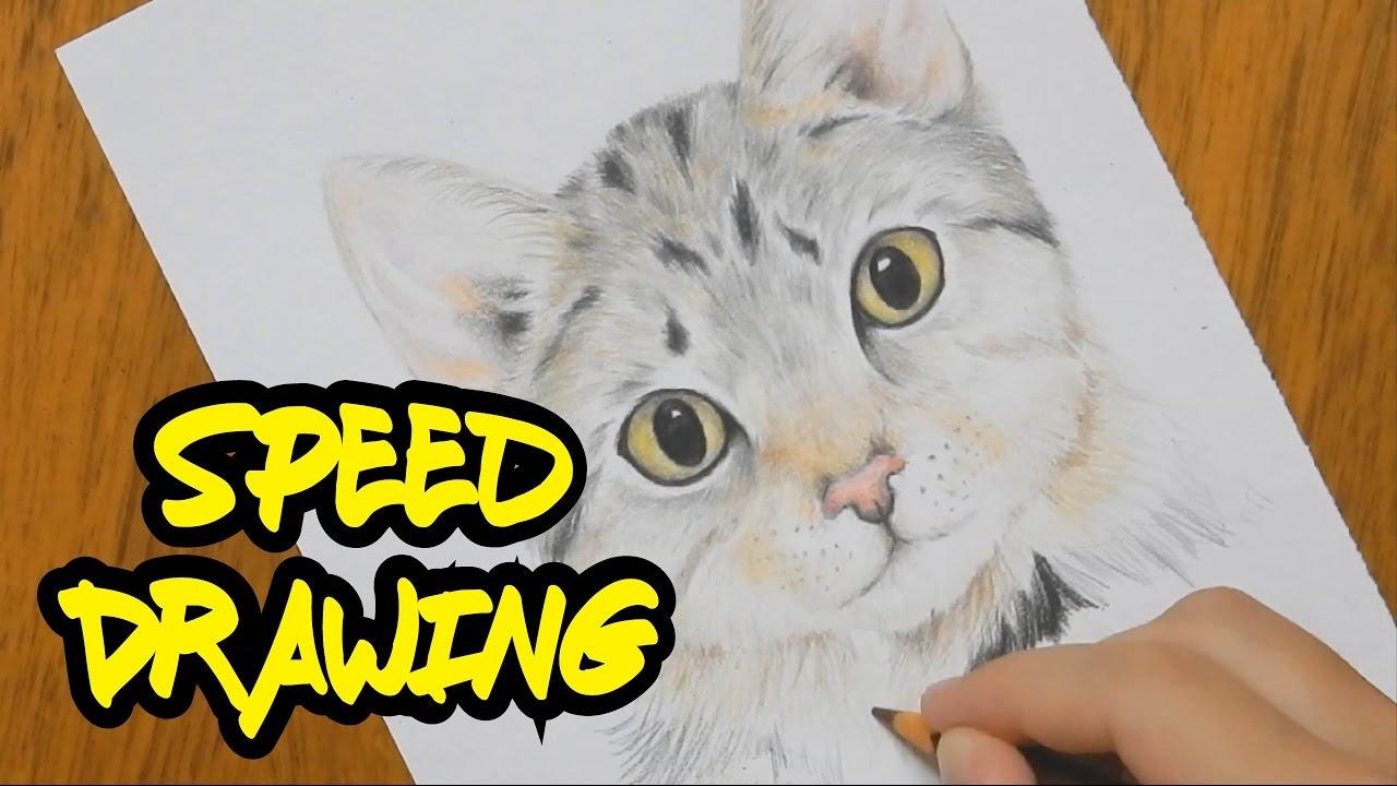 Desenhando Um Gato Realista Youtube