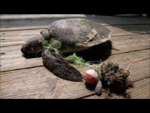 Animals Hurt By Waste