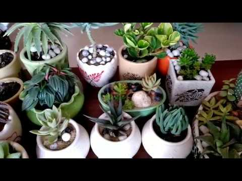 My Succulent Collection with their name /#succulentaddict/ My Succulent plant collection tour(Hindi)
