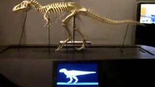 Dinosaur Skeleton Walking