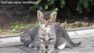 Два котенка играют с хвостом. Funny Kittens КОТЯТА.Смешные кошки.Видео для Детей.Смешные КОТИКИ.