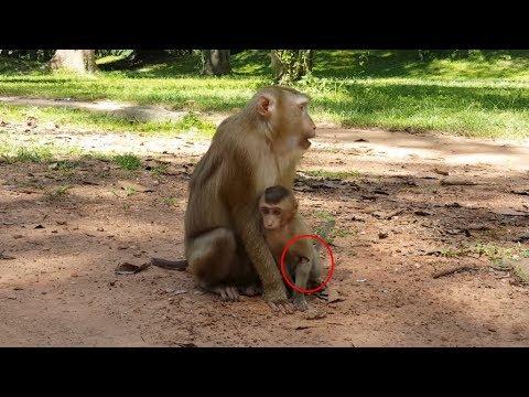 b9f09531fd Baby Monkey Hurt By Wound