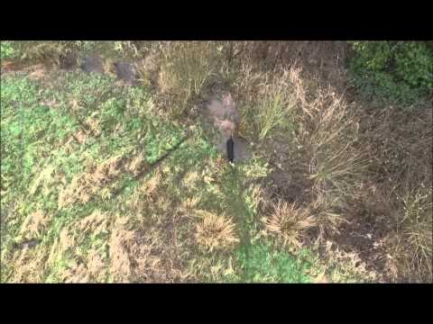 wirral-gundogs:-barry-cooper---retrieve-over-4-fences-and-a-ditch