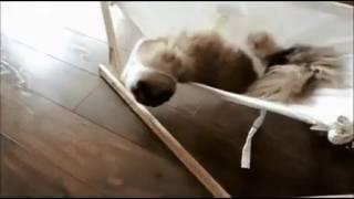 Кот VS гамак