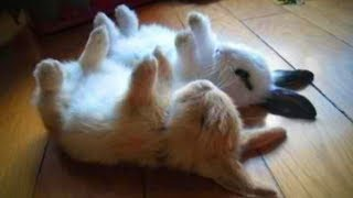 Bunnies Are Awesome 🐰🐇 Cute Bunnies Moments (Full) [Funny Pets]