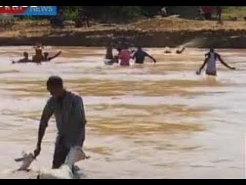 Deadly Cross; The Danger Of Crossing Crocodile-infested Ewaso Nyiro River