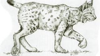 Как рисовать рыся черно белый рисунок формат А4 моя работа хобби pencil