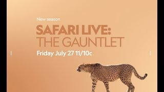 safariLIVE: The Gauntlet comes to you LIVE from the African wilderness on Nat Geo WILD!