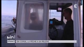 VU D'ICI : En Corse, la pe?che a sa rele?ve