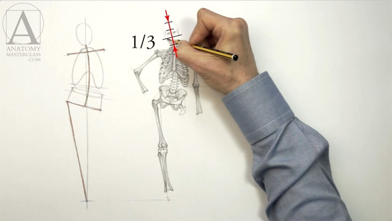 Human Body Skeleton Anatomy Lesson For Artists Youtube