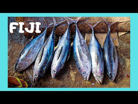 FIJI, the graphic FISH MARKET of its capital SUVA (Pacific Ocean)