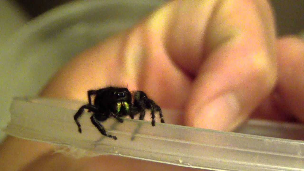 Spiders of Pennsylvania - pennlive com