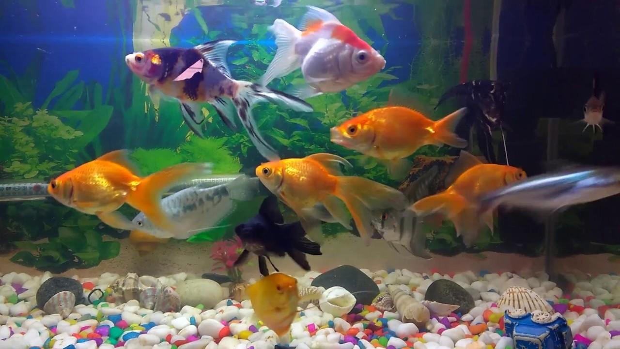Tips To Keep Your Fish Happy Healthy Home Aquarium Maintenance Snail Eggs Fish Tank Aquarium Fis Youtube