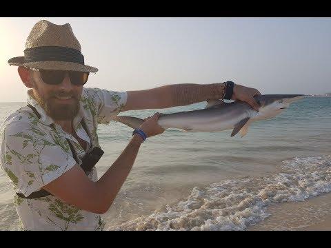 Shark Fishing Chaos - Cape Verde - Boa Vista