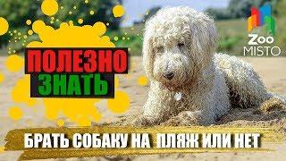 Полезно знать с ZooMISTO | Брать собаку на пляж или нет