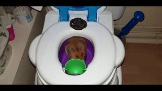 The FUNNIEST VIDEO. Lilly Hamster Superstar POOPED during her PARTY. Lots of fun guaranteed!