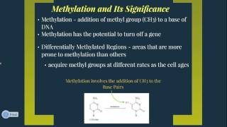 Methylation of DNA & Its Possible Effects on Aging