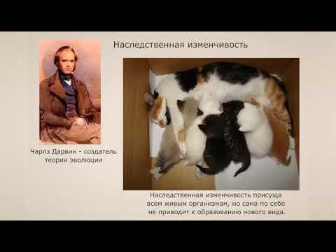 Видеоурок 7 класс дарвин и происхождение видов