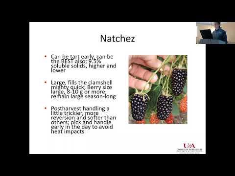 #2 Blackberry Varieties, John Clark- Arkansas Blackberry School