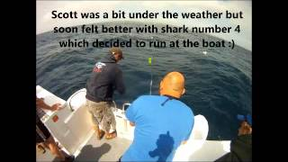 Repeat youtube video Sharking