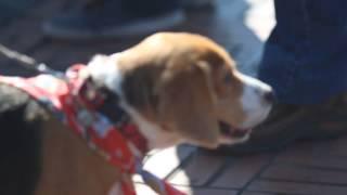 Reunion Beagle Enero 2015
