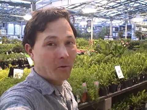 Organic Garden Soil Lowes