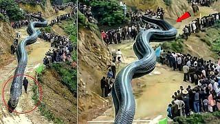 صيد أكبر ثعبان في العالم شاهد ماذا حدث !!