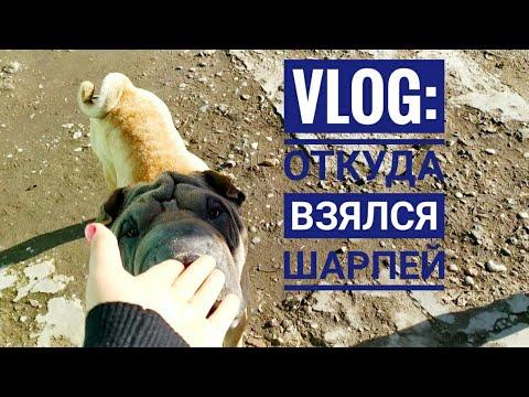 Влог/БЕЗЛАПАЯ кошка пришла В СЕБЯ, Прогулки и купание собак, прикорм БЕЗДОМНЫХ.