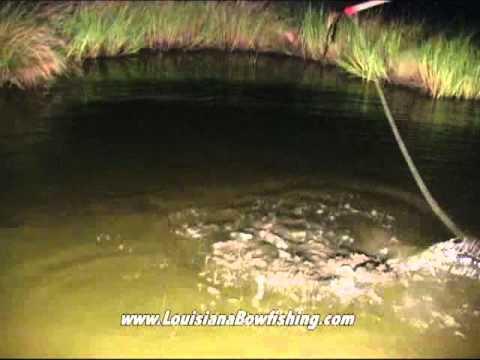 Louisiana Bowfishing