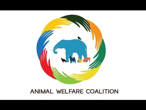 Why is the Animal Welfare Bill in Sri Lanka Necessary?