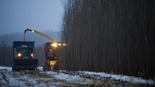 Salix harvesting / salixskörd