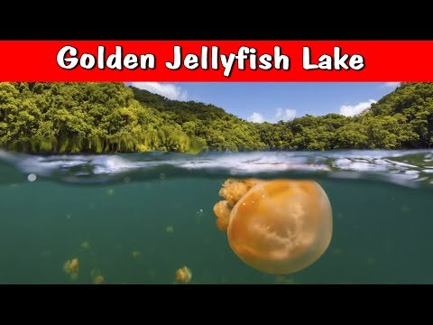 5 Mysterious Living Things Nobody Can Explain!