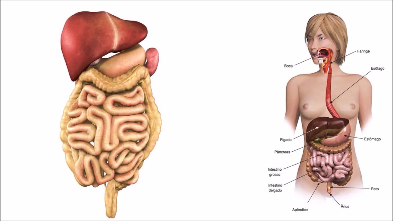https://i.ytimg.com/vi/eUd1UO60Zf8/maxresdefault.jpg | Anatomia ...