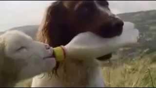 Удивительная  дружба животных