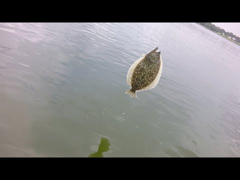 Flounder Fishing (Baytown, Tx)