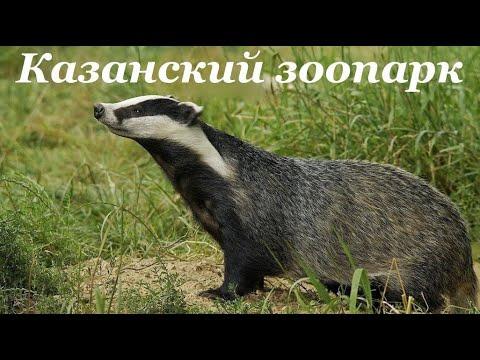 Казанский зоопарк #лучшедома #сидимдома #мывместе #живемдома