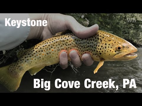 WB - Fly Fishing Keystone Select, Big Cove Creek, PA - June '17