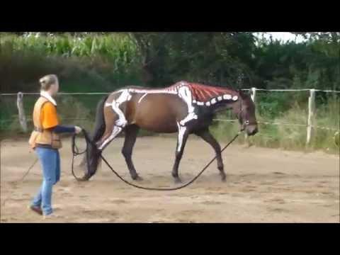 Thementag - Bewegungsapparat Hund und Pferd - YouTube