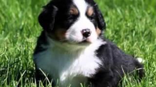 Exposição de Filhotes de várias raças de cães. Cute Puppies...
