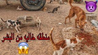 محاوله انقاذ اكثر من 1000 قط وكلب بمنطقه مهجوره 😱 (هجرة خريص)