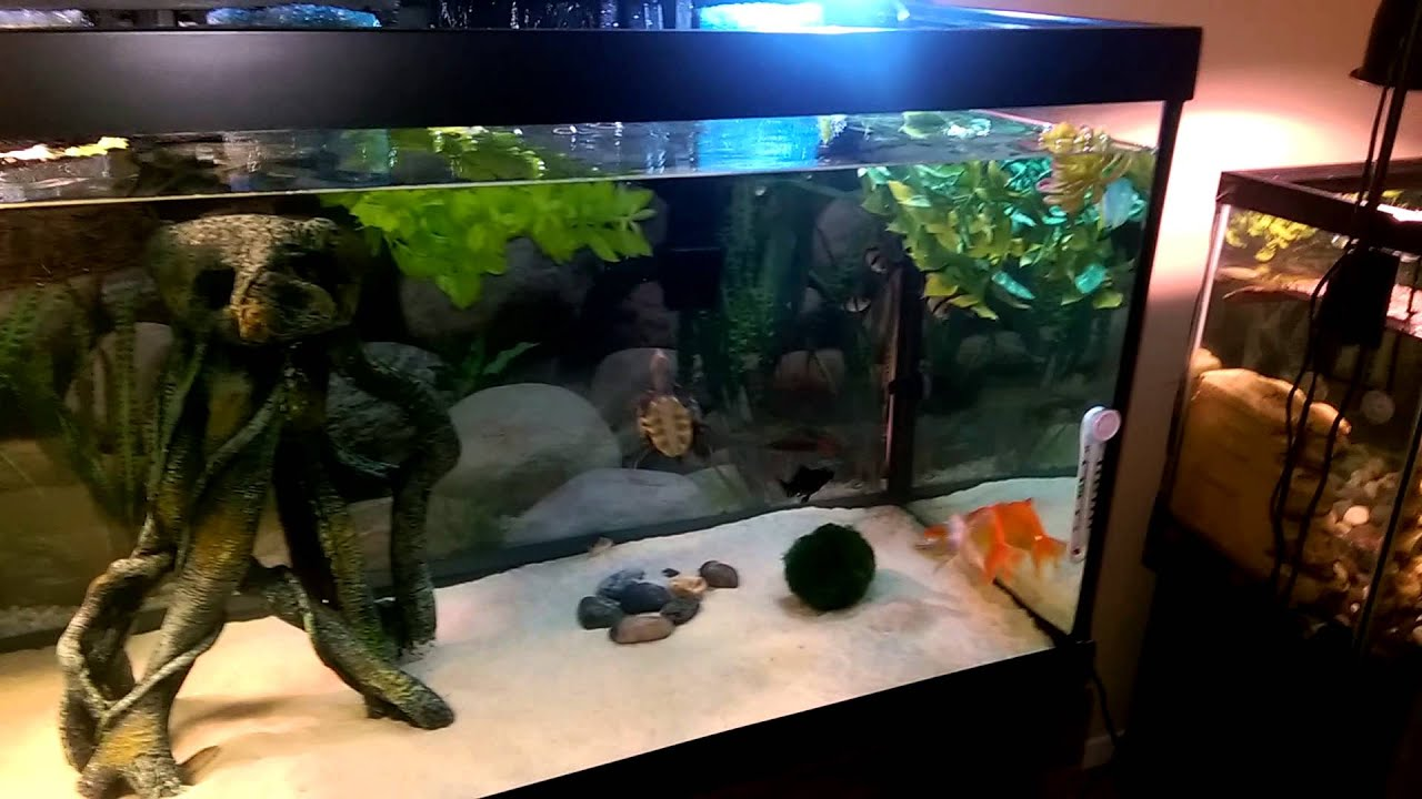 Turtle Tank Decor Updated Turtle Tankssand In 75 Gallon Youtube