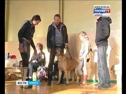 В Брянске состоялась Всероссийская выставка собак