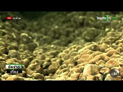 อีโบลา  คืออะไร   ข่าวไทยรัฐออนไลน์